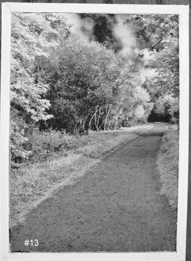 Black and White Nature Road - $7