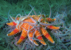 Starfish and Brittle Stars