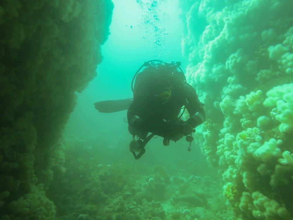 Snowy reef