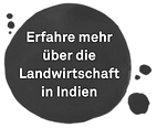 Infobutton_Indien.png