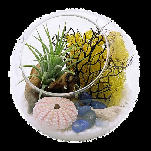 Air Plant Terrarium with Sea Urchin Shell