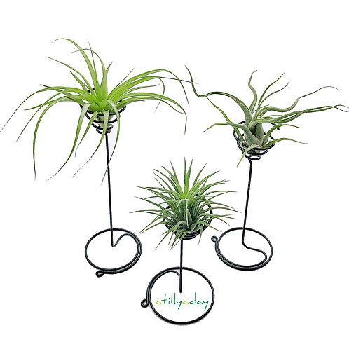 Set of 3 Air Plant Stand