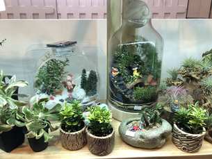 Assorted Pots and Terrariums