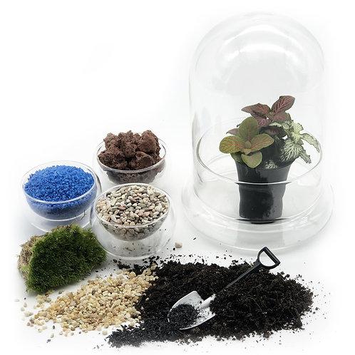 DIY Glass Dome Terrarium Package