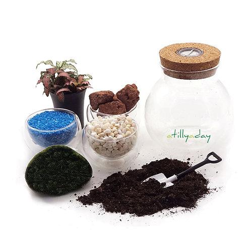 DIY Round Jar Terrarium Package