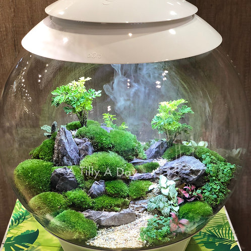 Customised BiOrbAIR Terrarium
