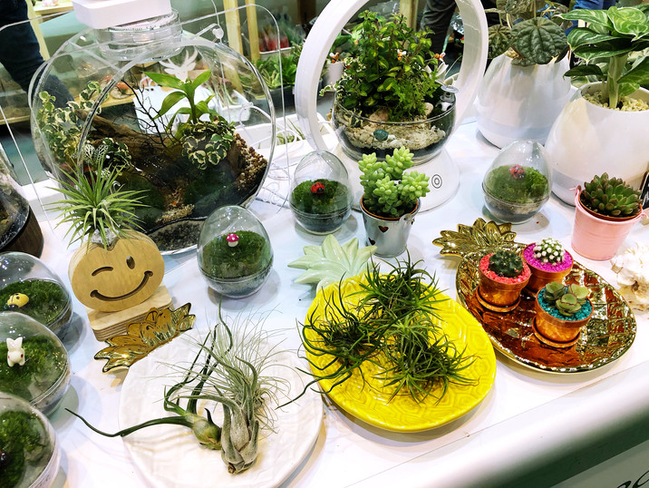 Terrarium, Air plants & Decorated pots