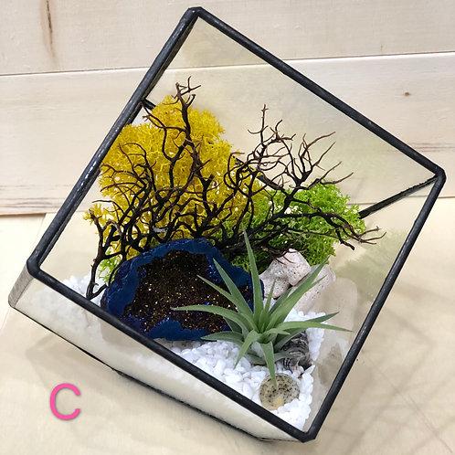 Airplant with Aura Quartz Terrarium