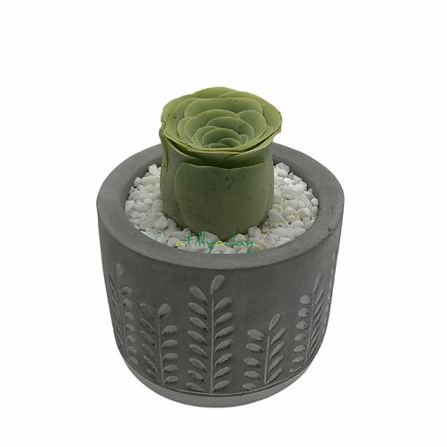 Greenovia in Cement Pot