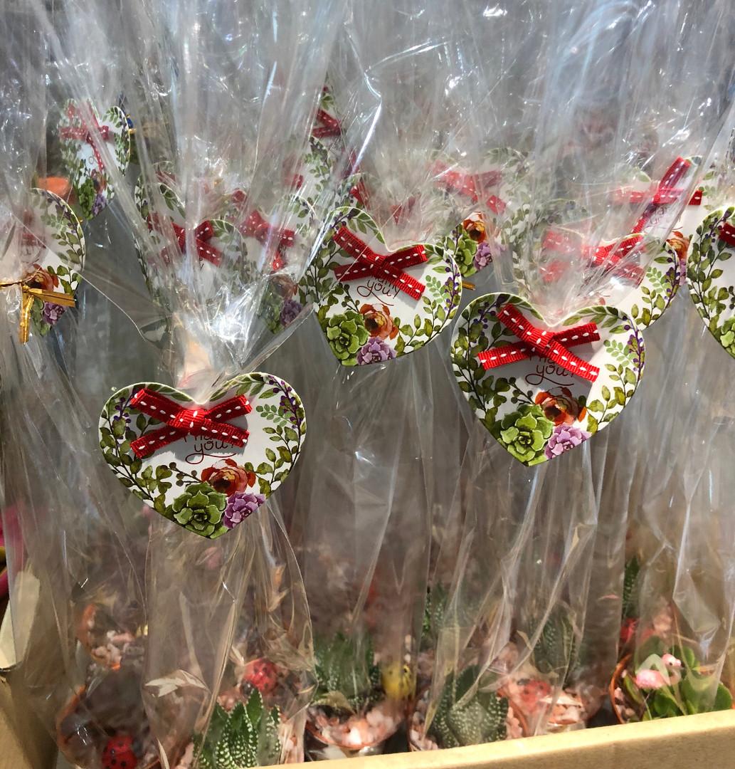 Valentine Cactus