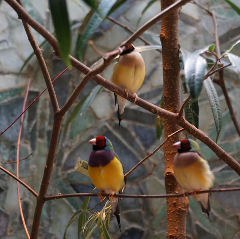 Vögel im Zoo Frankfurt