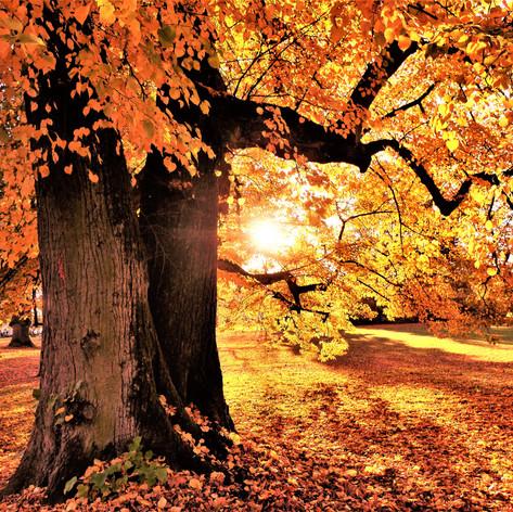 Sonnenstrahlen im Herbstlaub