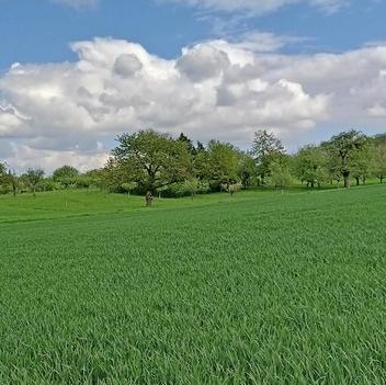 Panorama Agrarfläche