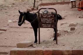 Eselsbahn in Jordanien