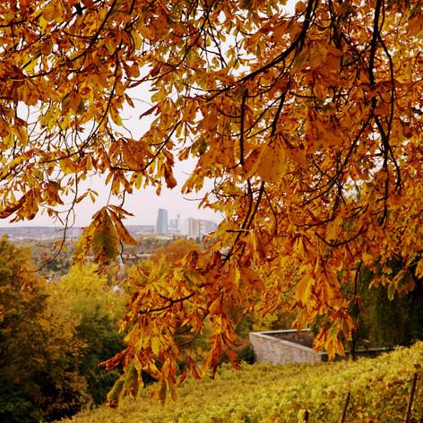 Herbst auf dem Lohrberg_2