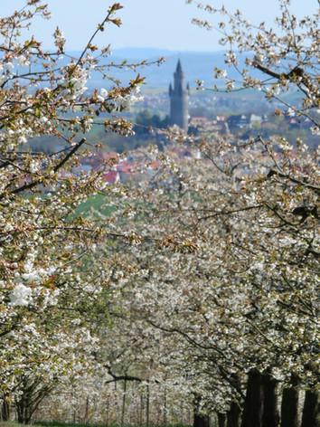 Blick von Ockstadt auf Friedberg