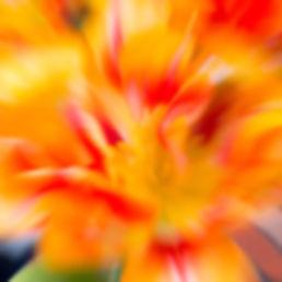 Tulpenfeuer.jpg