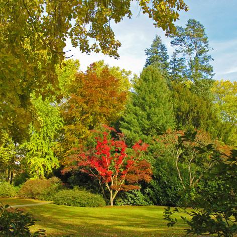 farbenfroher Park