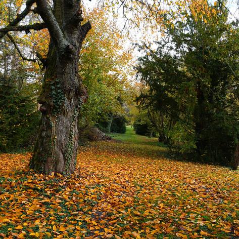 Herbst auf dem Lohrberg_1