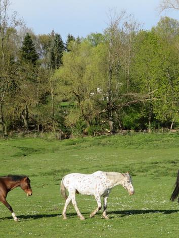 Pferdeweide Nieder- Erlenbach
