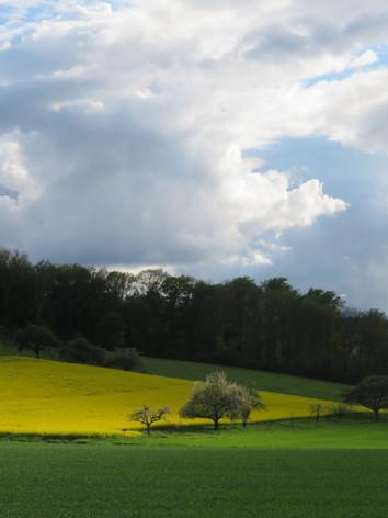 Rapsfeld bei Büdingen
