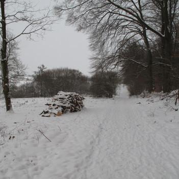Grenze zum Vilbeler Wald