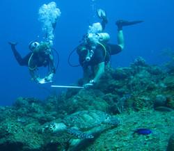 Marine Field Projects