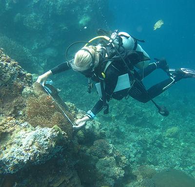 Theresa anemonefish.JPG