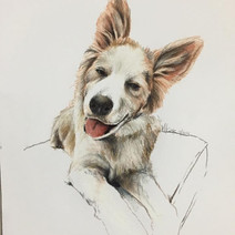 Coloured Pencil on paper