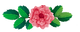flores logo.png