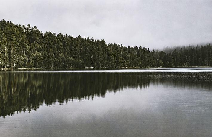 pexels-eberhard-grossgasteiger-629162.jpg