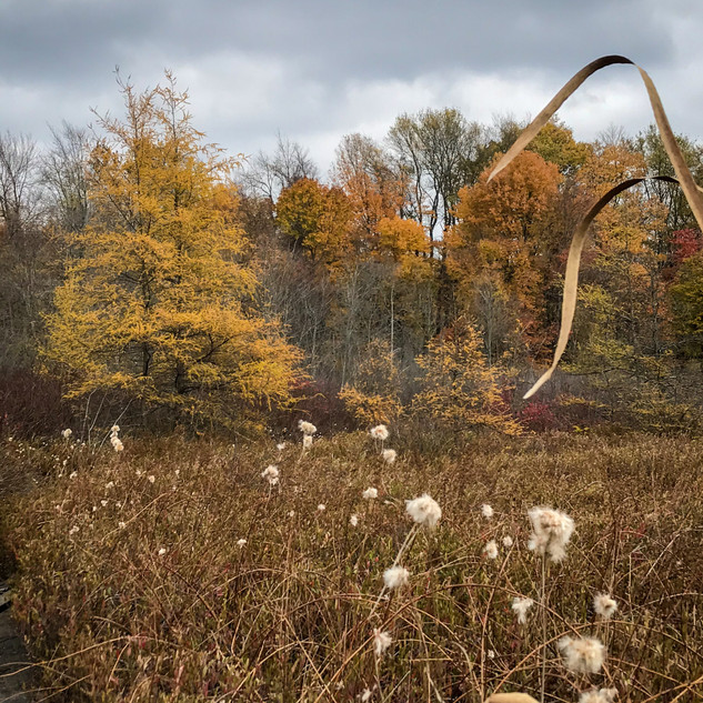 Fall in the Bog