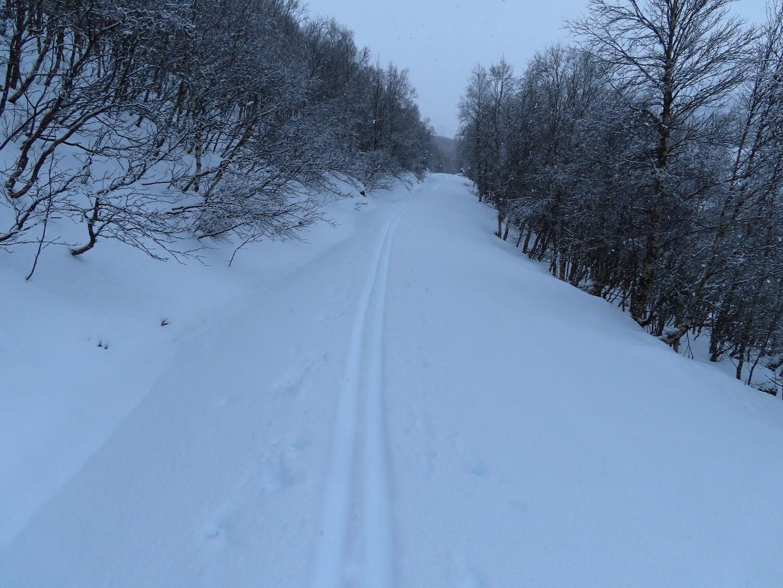 Midt mellom Hjørnås og Bassur 14.03.21
