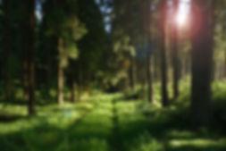 forest-458324_640.jpg