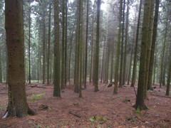Nationalpark Siebengebirge