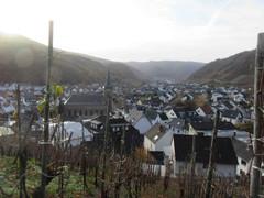 auf dem Rotweinwanderweg von Dernau nach Ahrweiler