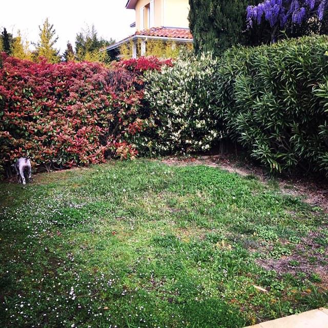 Jardin avant intervention