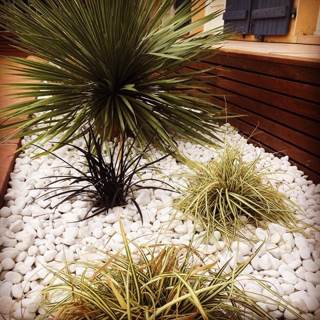 plantes méditerranéennes carex yucca rostrata