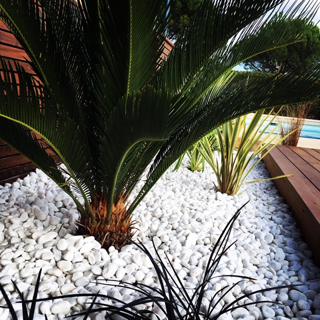 paillage minéral plantes méditerranéennes cycas revoluta phormium paysagiste Vesta création