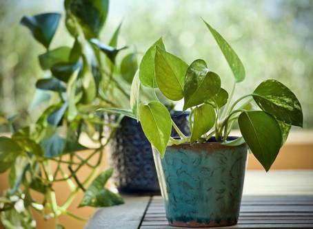 Notre Top 5 des plantes d'intérieur