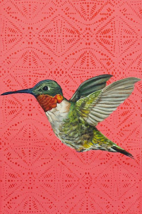 Humming bird, 11''x 17'' signed print