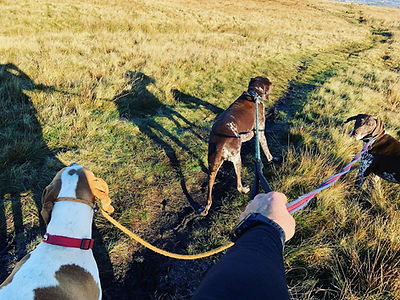 group dog walking bury take the lead
