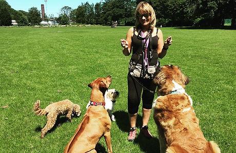 dog training and behaviour in bury