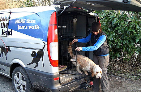 professional dog transportation servcies in bury