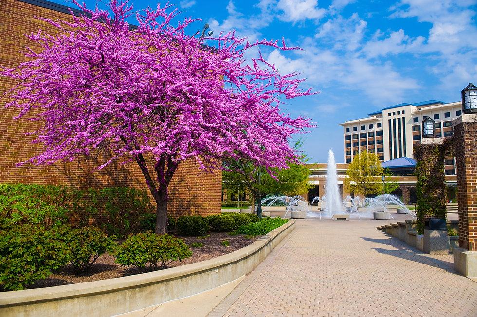 287059059_287046335_2008_spring_campus_(