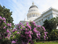 Capitol+rhododendron.JPG