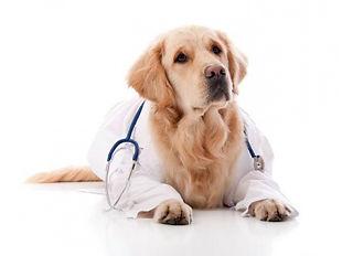 собака доктор.jpg