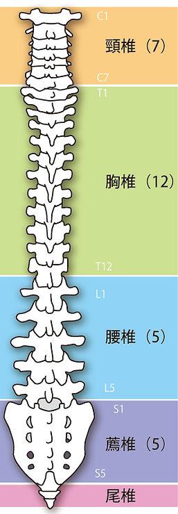 病気と背骨