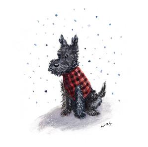 Scottie in Sweater 2019.jpg