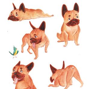 French Bulldog Character Study